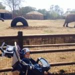 Nicky-and-elephant