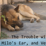 The Trouble with Milo's Ear and Vets