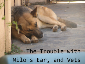 milos-ear-and-vets