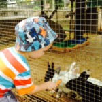 feeding rabbits with carrots at the touch farm