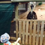 ostrich-and-toddler