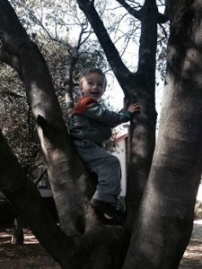 toddler-in-tree