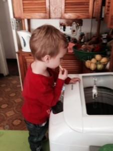 zebra-on-washing-machine
