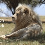 A Visit to the Lion Park