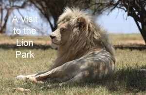 visit-to the lion park